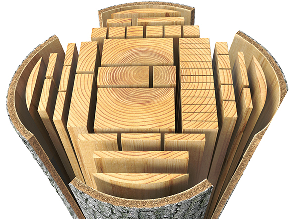 Different types of wood cut from a log